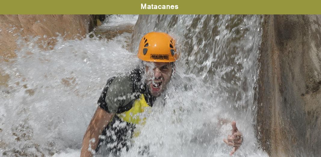 Matacanes